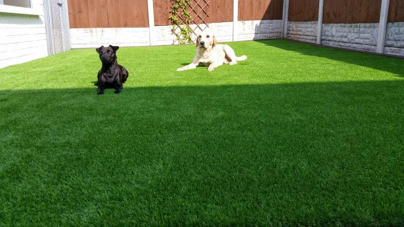 How Much Does Artificial Grass Cost? - Forever Grass